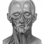 Science Art: <i>Figure 134</i>,  from &#8220;Face,&#8221; by Richard Partridge, in <i>The Cyclopaedia of Anatomy and Physiology</i>, 1839
