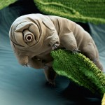 Science Art: <i>Tardigrade</i>