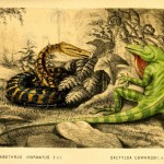 Science Art: <i>Plate IV: </i>Chilabothrus Inornatus<i> and </i>Dactyloa Edwardsii, by M&#038;N Hanhart,1851.