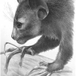 Science Art: <i>Plate VI, from </i>Monograph on the Aye-aye, by Richard Owen, 1863