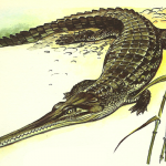 Science Art: <i>Indian Gharial</i> by Wilhelm Eigener, 1958