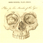 Science Art: <i>Plan for the Muscles of the Eye</i> by John Bell, 1810