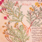 Science Art: Plate from <i>Kitab fi al-adwiyah al-mufradah</i> by Abu Ja`far al-Ghafiqi.