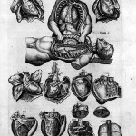 Science Art: <i>Hearts and Lungs</i> by Juan de Valverde, 1598