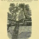 Science Art: <i>&#8220;Dolerite&#8221; Dyke Traversing &#8220;Desert Sandstone&#8221;</i>, 1872.