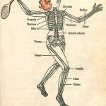 Science Art: <i>Two hundred bones form the framework of your body</i>, 1958.