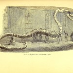 Science Art: Hydrarchos Sillimanni, from <i>The great sea-serpent</i>, by A. C. Oudemans, 1892.