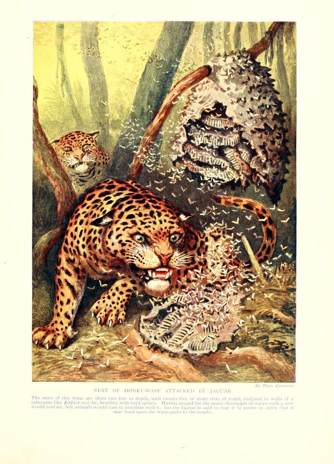 Honey Wasp Attacked by Jaguar, Marvels of Insect Life, 1916