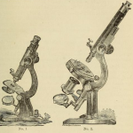 Science Art: <i>No. 1 and No. 2</i>, from <i>Primer of the Clinical Microscope</i>, 1879.