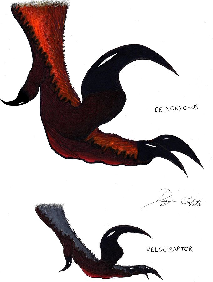 Sickle_Claws