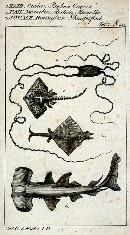 Buffon's Natural History