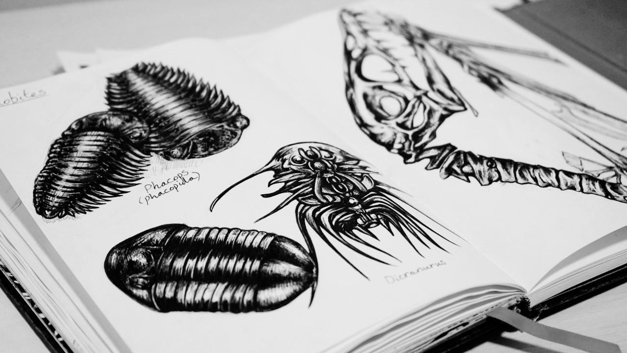 trilobiteslifeinretrograde