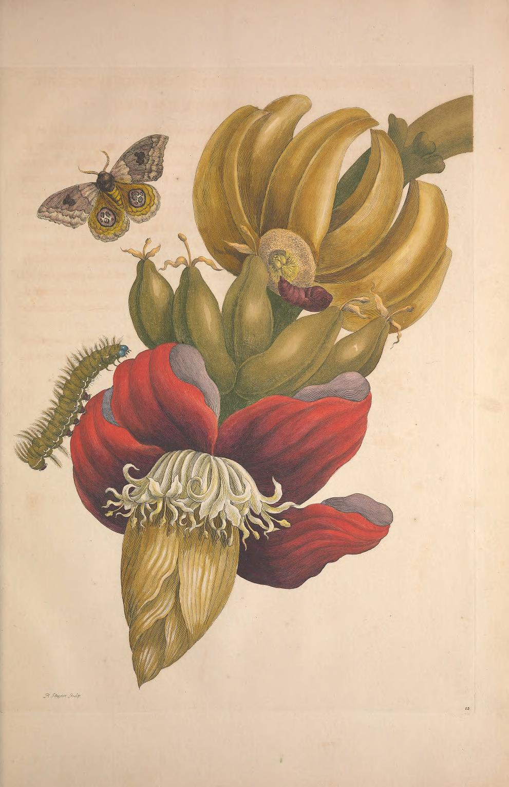 from  https://www.biodiversitylibrary.org/item/129308#page/45/mode/1up