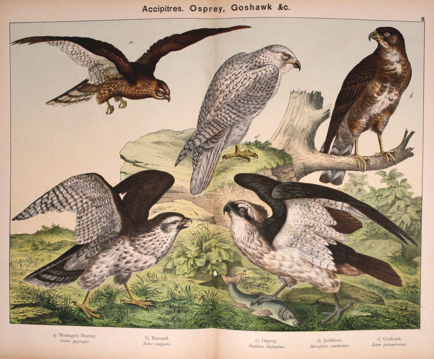 Natural history of the animal kingdom for the use of young people Brighton :E. & J.B. Young and Co.,1889. http://www.biodiversitylibrary.org/item/91187