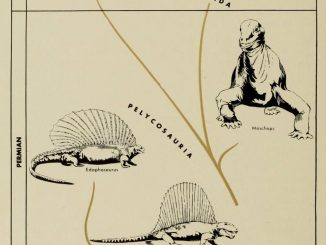 Scientific illustration of synapsid reptiles, which are not dinosaurs really, but include things like Dimetrodon, from The Dinosaur Book.
