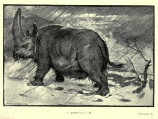 Scientific illustration of a prehistoric rhinoceros, an elasmotherium