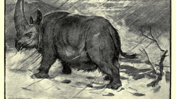 Scientific illustration of a prehistoric rhinoceros, an elasmotherium