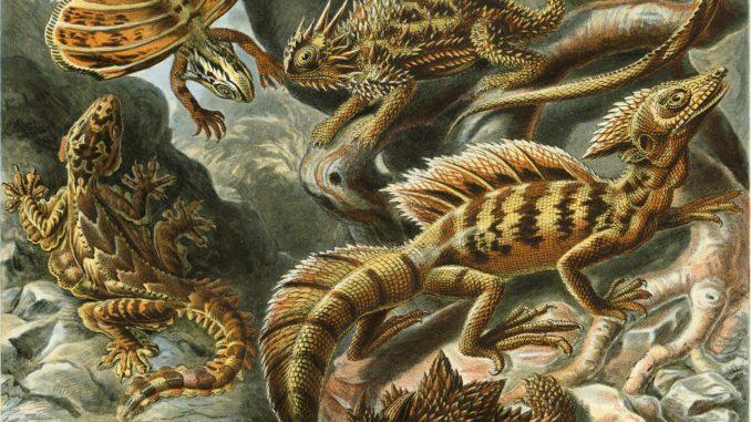 Scientific illustration of lizards by Haeckel