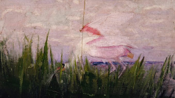 Scientific illustration of a roseate spoonbill at sunset, supposedly showing its ability to camouflage itself against a pink background.