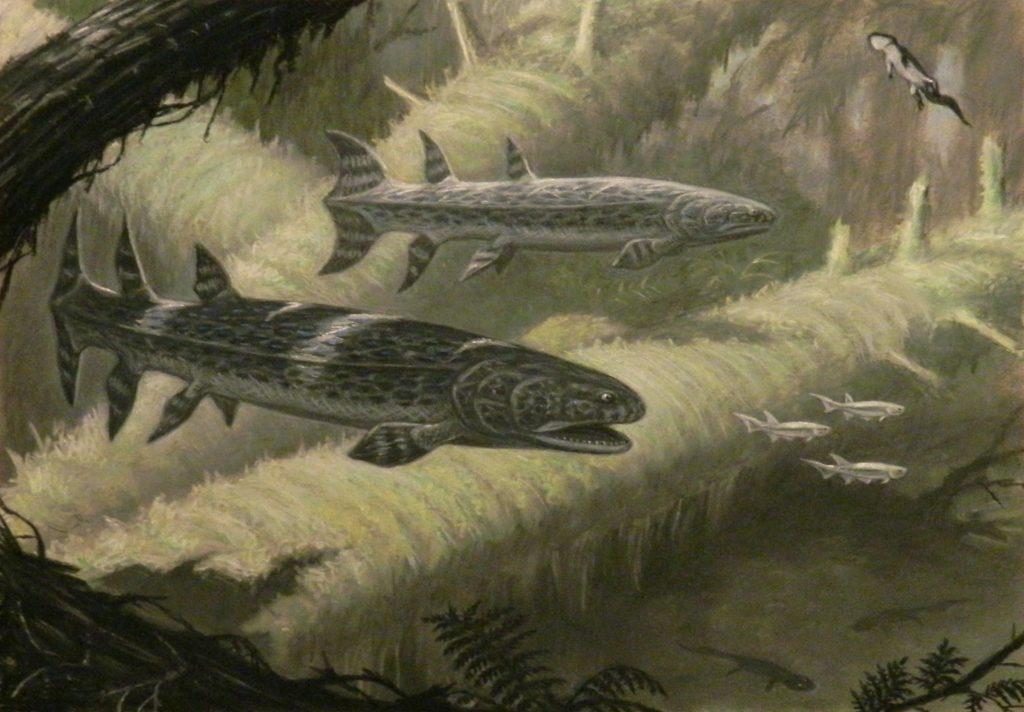 Scientific illustration of prehistoric fish from the Devonian period.