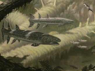 Scientific illustration of prehistoric fish from the Devonian period.