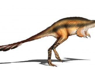 Scientific illustration of a birdlike dinosaur named Alvarezsaurus