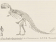 Scientific illustration of T rex, named by HF Osborn, discovered by Barnum Brown, drawn by WD Matthews. Big dinosaur!