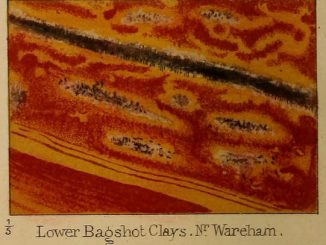 Scientific Illustration of a geological sample, from On the Disposition of Iron in Variegated Strata, an image of iron in clay.