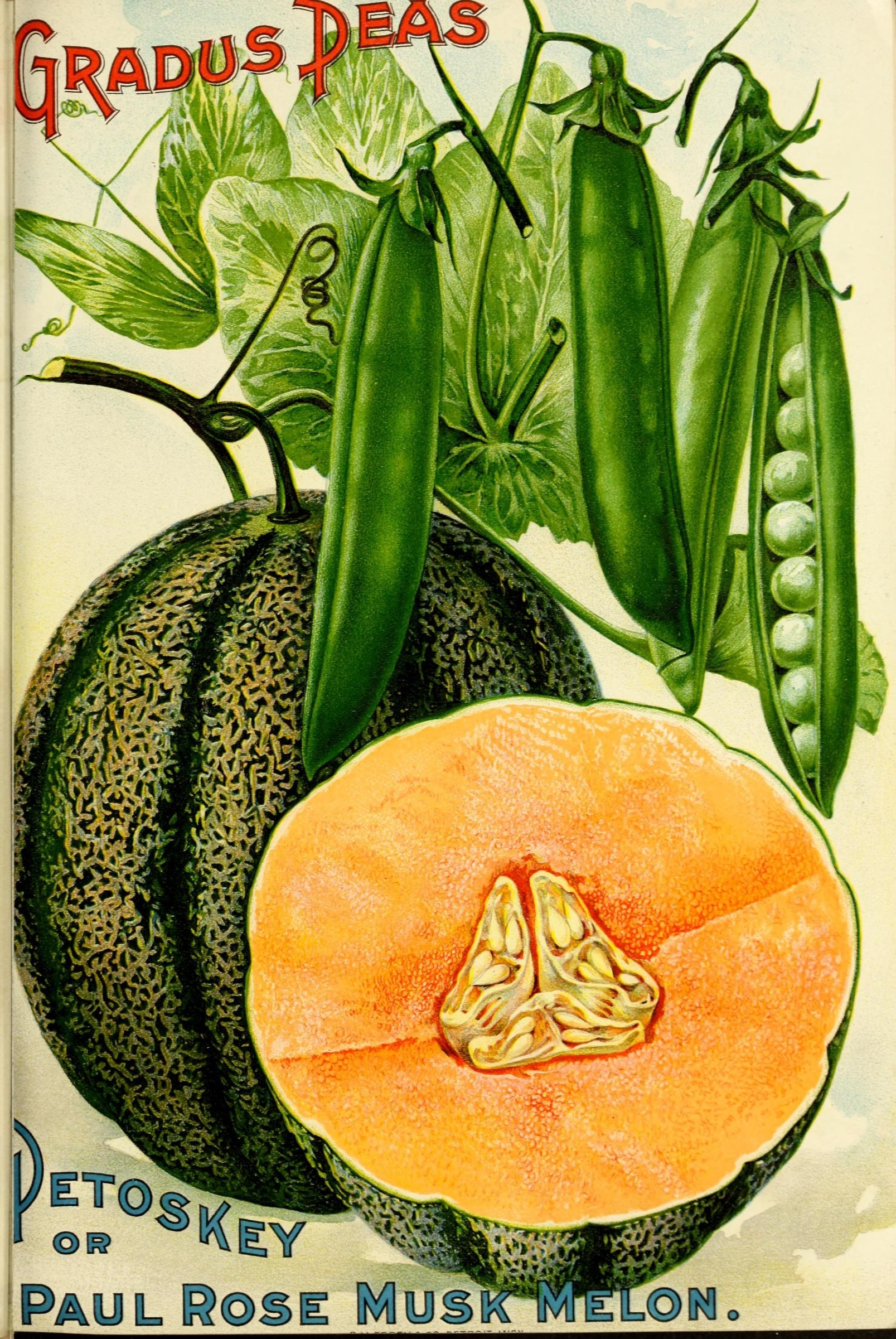 Scientific Illustration of peas and musk melon, from an 1899 seed catalog