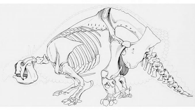 Scientific illustration of a prehistoric armadillo, the giant armored glyptodont.