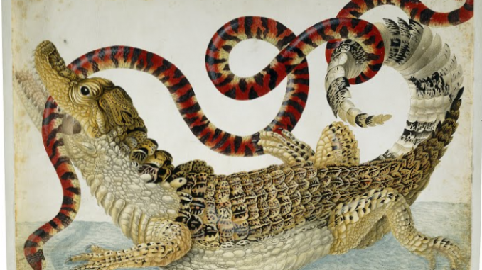 Scientific illustration of a caiman and a false coral snake.