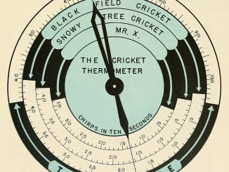 Scientific illustration - or a diagram, really - showing how to tell the temperature by the number of cricket chirps for different species of crickets.